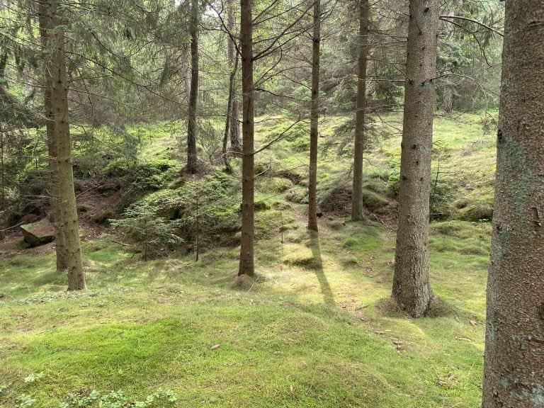 Skov Bornholm